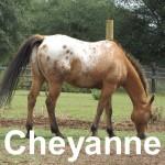 cheyanne