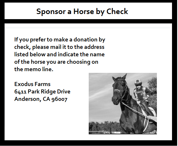 sponsor horse check