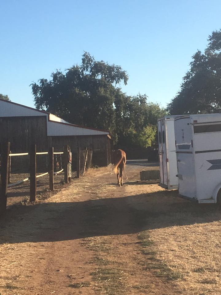 Missy heading back to barn at dinnertime image